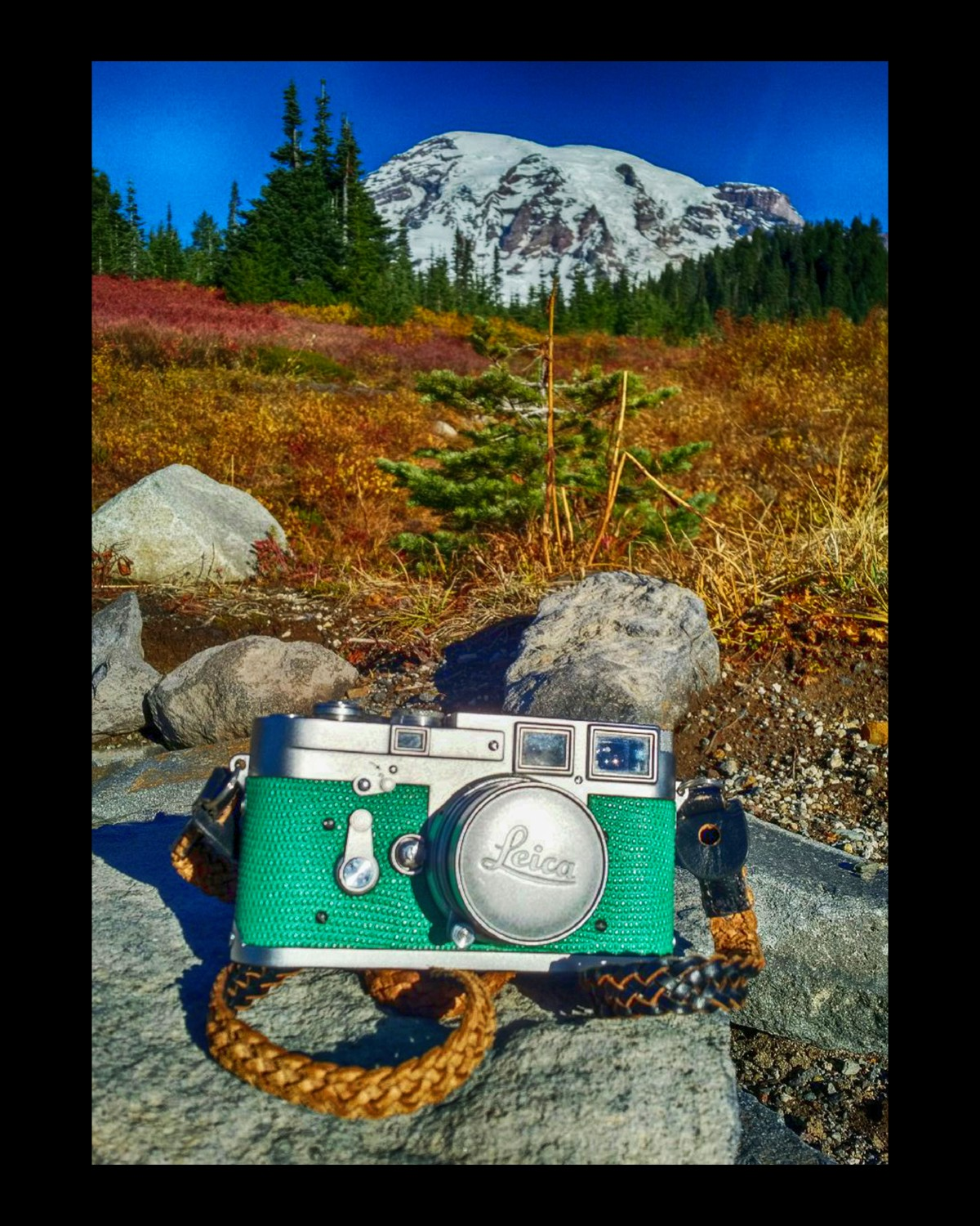 So how did my Washington State film cameras do?